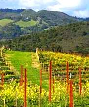 California wine country at Aurora Park Cottages