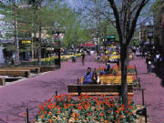 Spring flowers at the pedestrian mall in Boulder